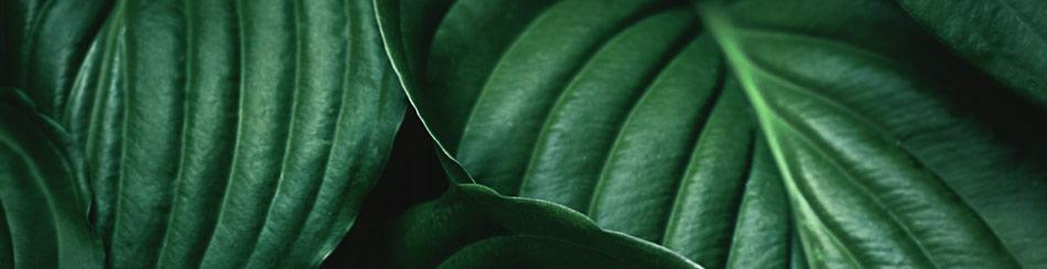 greensmall